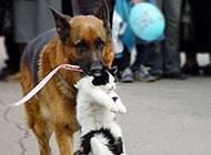 搞笑动物图片之缉拿归案