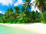 大自然中最美的绿色风景图片