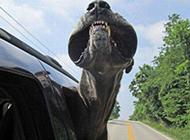 最凶猛的动物图片