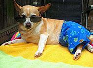 最新狗狗搞笑造型图片
