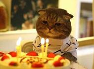 呆萌动物过生日的图片