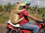 每日一囧图之坐摩托车