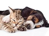 可爱的宠物猫与狗的图片赏析