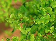 雨后的树叶绿色ppt背景图片