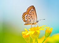 有蝴蝶的唯美清新背景图片