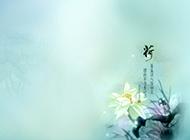 中国风淡雅荷花背景图片