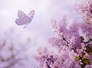 花丛中的蝴蝶唯美意境图片
