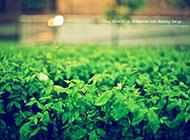 朦胧清新绿色ppt背景图片