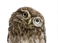 可爱卖萌的猫头鹰高清图片