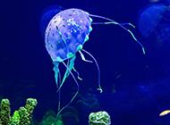 神秘的海洋水母高清壁纸