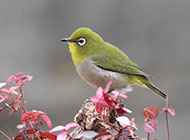 可爱的鸟儿超萌动物壁纸