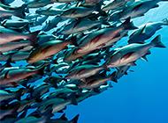 海鱼遨游的海底世界高清图片
