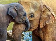 体躯庞大的非洲大象图片
