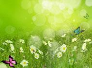 绿色花草淡雅背景图片