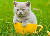 超可爱的萌宠猫咪图片