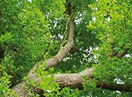 枝繁叶茂的大树高清壁纸