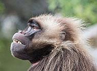 动物园的可爱猴子图片