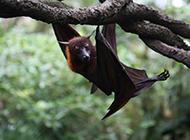 倒挂在树上的蝙蝠图片素材