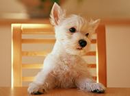 可爱的小狗狗高清写真图片