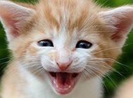 呆萌娇小的小猫咪图片素材