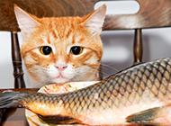 呆萌小黄猫和鱼高清图片