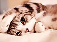 卖萌可爱的小猫唯美图片