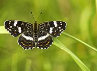 好看的蝴蝶高清摄影图片