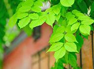 绿色清新的树叶图片