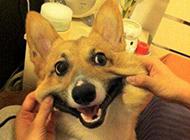 可爱的二货狗狗搞笑图片