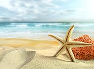 海边沙滩贝壳特写图片欣赏