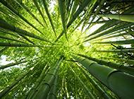 大自然绿色竹林风景俯拍图片
