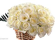 唯美纯洁的白玫瑰图片集锦