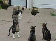 动物PS图片之锻炼肌肉