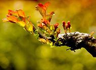 树的嫩芽实拍图片