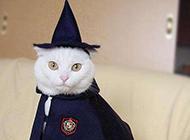 魔法猫咪超可爱动物图片
