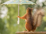 最可爱的松鼠唯美图片