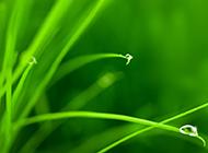 精选绿色植物水滴背景素材