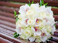 漂亮的白玫瑰手捧花图片