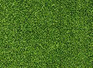 春天碧绿的草地图片欣赏