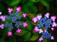大自然唯美花卉植物壁纸精选