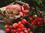 刚采摘的桃子图片赏析