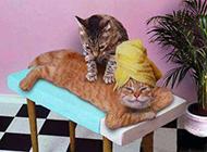 动物搞笑图片之按摩的猫咪