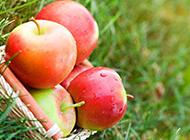 篮子里新鲜的苹果图片
