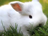 乖巧萌萌的小兔子图片