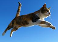 跳跃在空中的猫咪图片