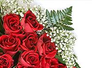 鲜艳的玫瑰花图片素材