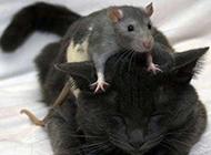 超级搞笑动物图片之别跑