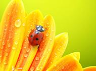 可爱的昆虫超清特写图片