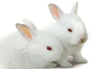 两只萌萌的小兔子图片