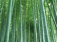 唯美的风景竹林图片素材